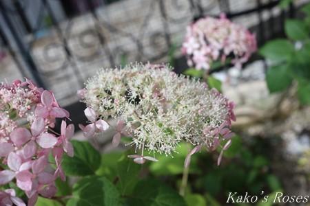 s-IMG_3470kako.jpg