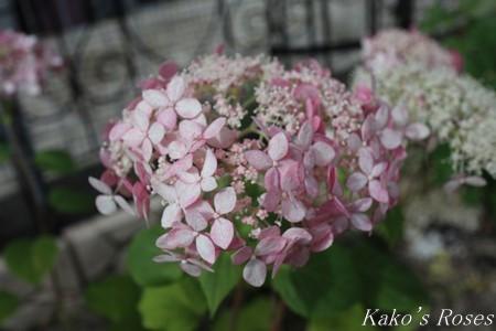s-IMG_3471kako.jpg