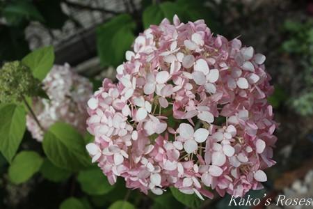s-IMG_3473kako.jpg