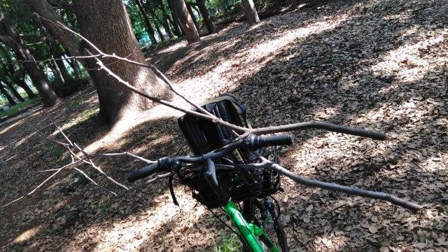 木の枝拾い2019 (2)