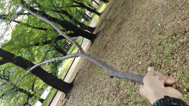 木の枝拾い2019 (3)