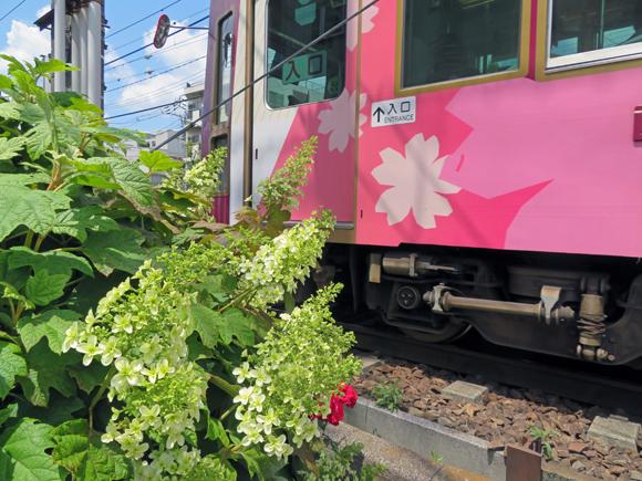 20190517_084 都電荒川線_荒川車庫