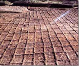 古代水田跡