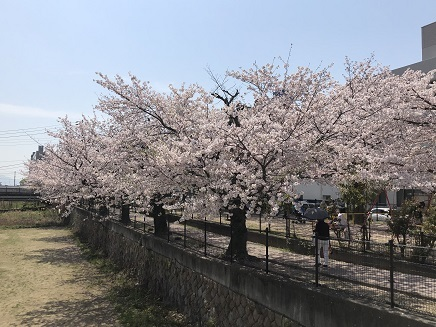 4082019 二河橋西詰桜 S5
