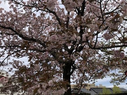 4112019 花のまわりみち S2