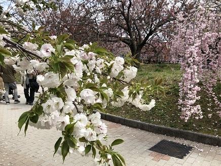 4112019 花のまわりみち S3