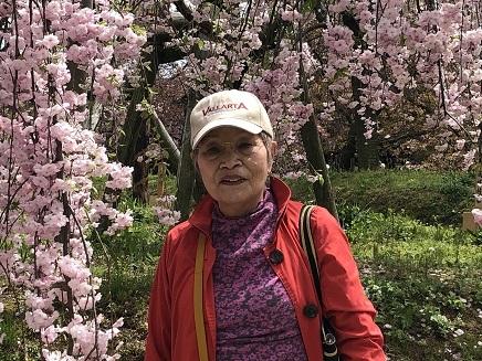 4112019 花のまわりみち 今年の枝垂れ桜 S5