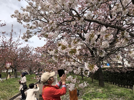 4112019 花のまわりみち 今年の枝垂れ桜 S9
