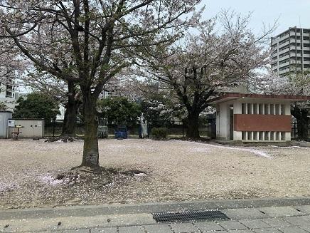 4112019 呉二河河畔散る桜 S