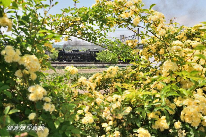 190511_D850_c_6954_mokkoubara.jpg
