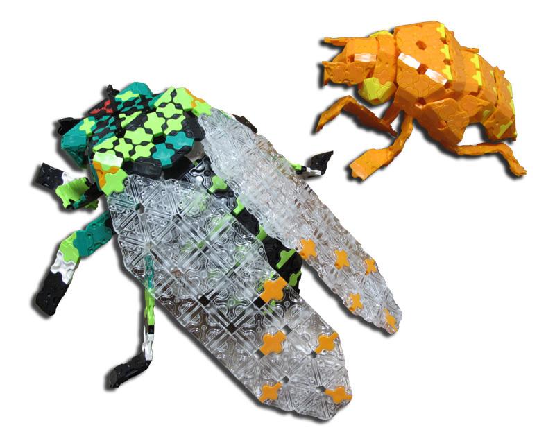 cicada_4191.jpg