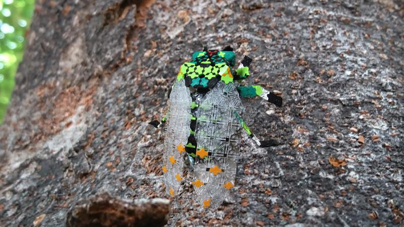 cicada_4643.jpg