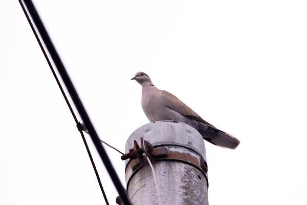 kimsbird17098.jpg