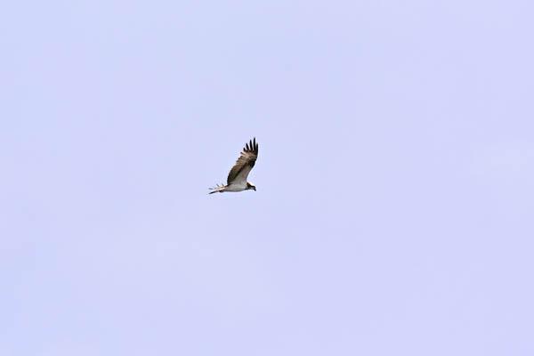 kimsbird17205.jpg