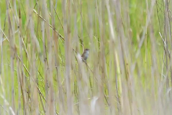 kimsbird17209.jpg