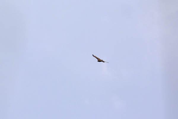 kimsbird17212.jpg