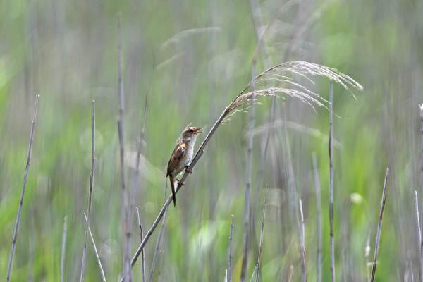 kimsbird17215.jpg