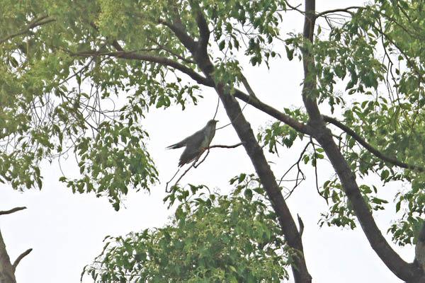 kimsbird17266.jpg