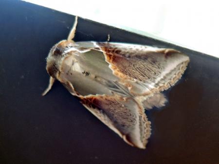 アヤトガリバ