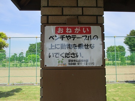IMG_6630 (2)