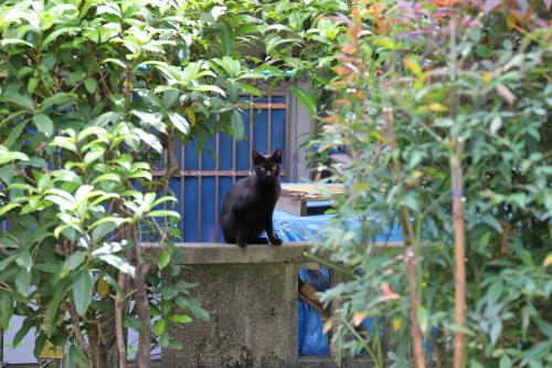 さっきの黒猫?
