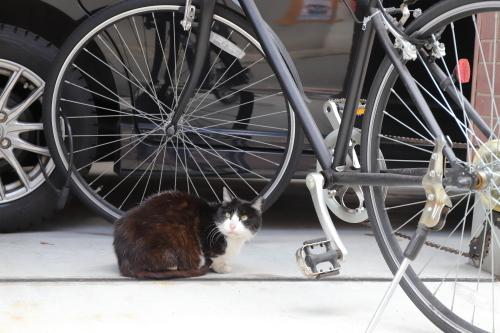 自転車のこちら側