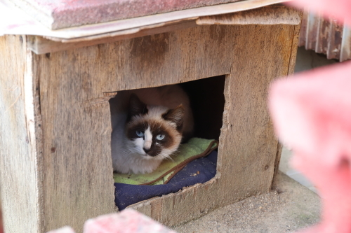猫ハウスの美猫