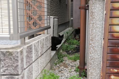 逃げた黒猫