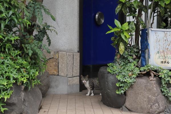 ホテル猫1