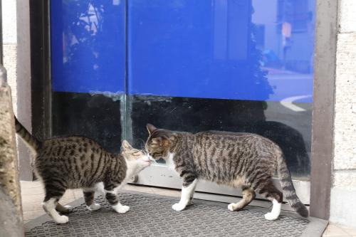ホテル猫4