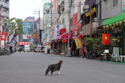 ホテル猫6