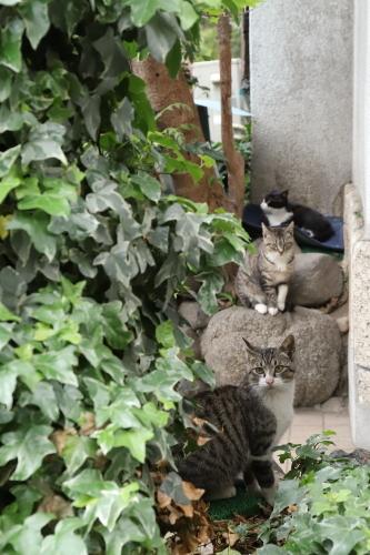 ホテル猫5