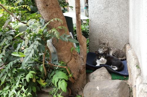 ホテル猫7