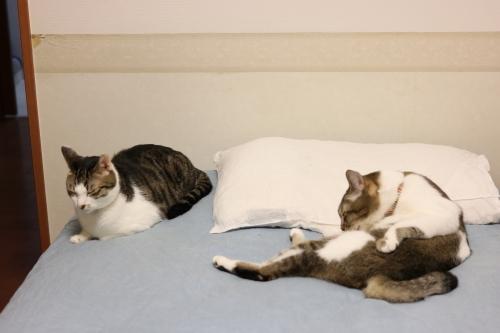 ベッド2人