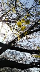 2019年4月5日桜日和8