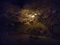 長崎旅行_聖地_グラバーSL夜景_010