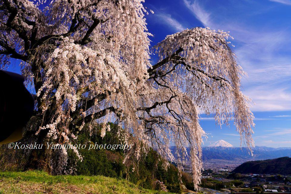 枝垂れ桜の彼方に (山梨県牧丘町)