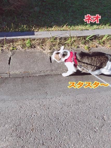 th_IMG_8955.jpg