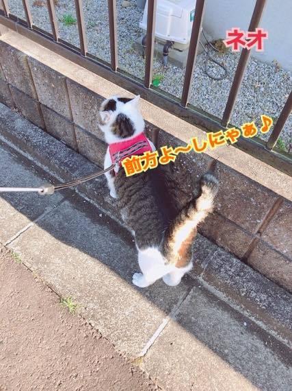 th_IMG_8956.jpg