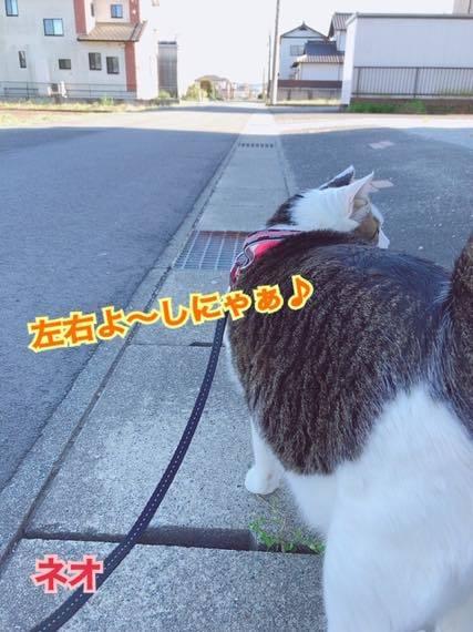 th_IMG_8957.jpg