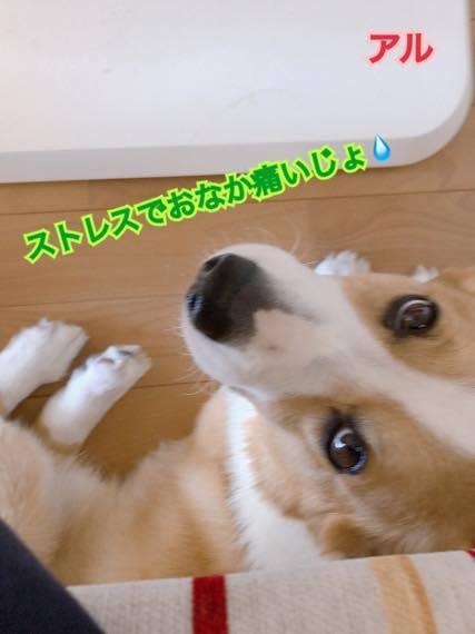th_IMG_9141.jpg