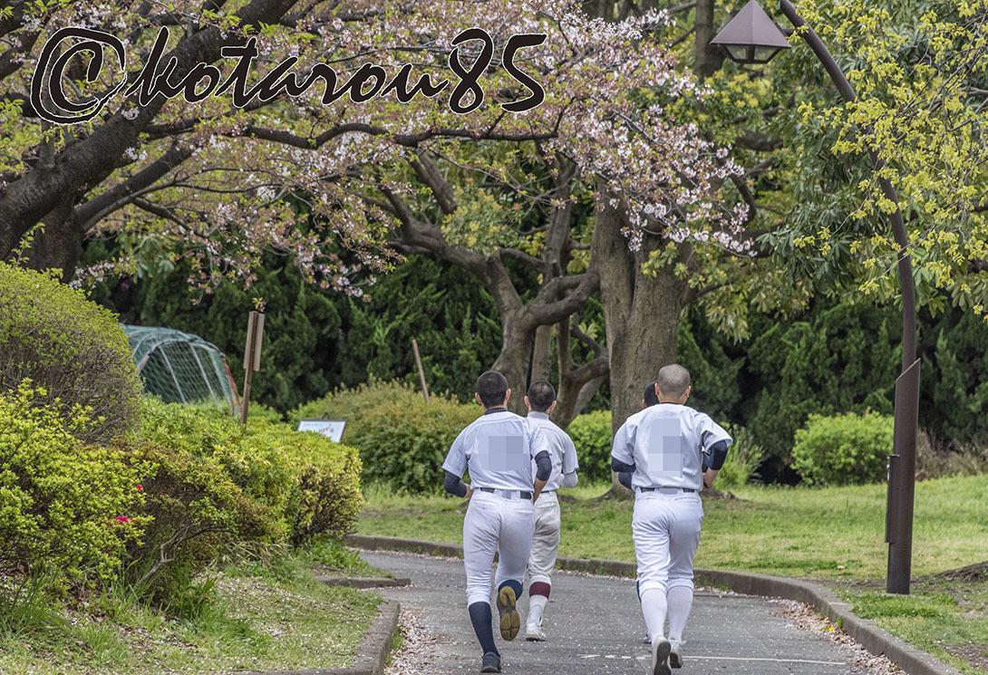 名残り桜5 20190415