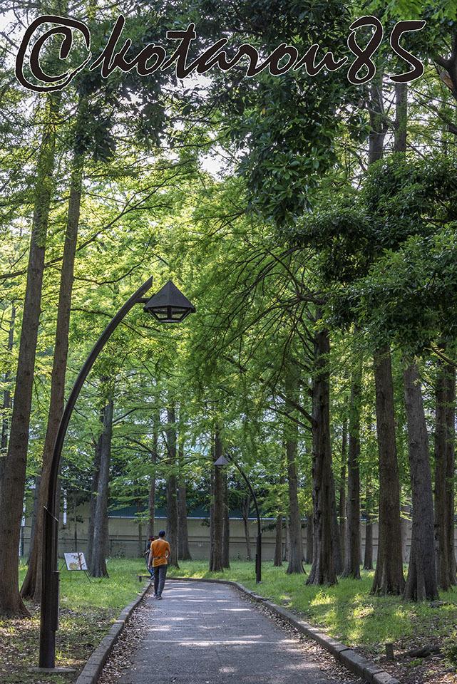 森の細道2 20190514