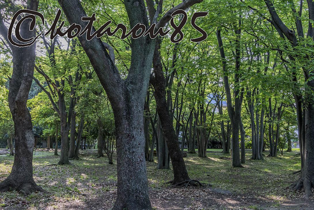 森の細道4 20190514