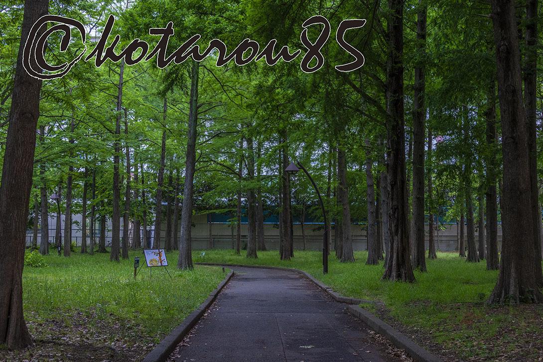 水曜日の猿江恩賜公園2 20190530