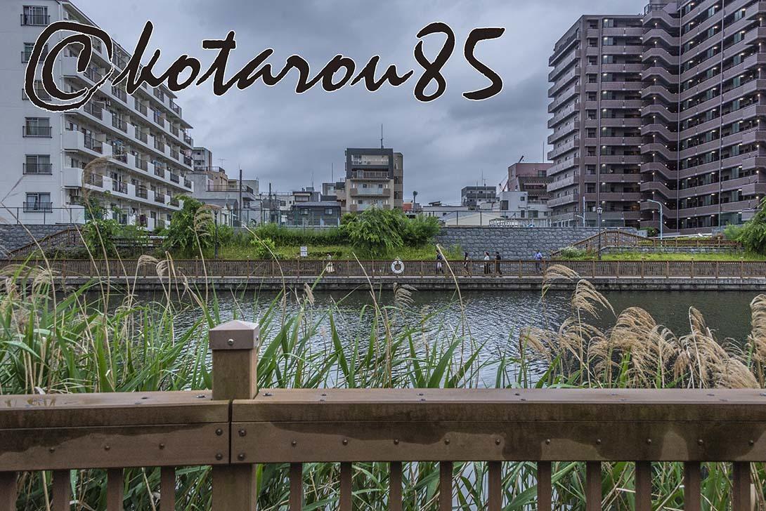 梅雨空の小名木川 20190610