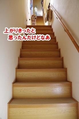 階段落ち 1