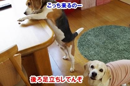 ひょこ 4
