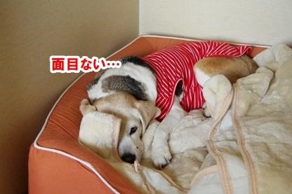 介護疲れ 3
