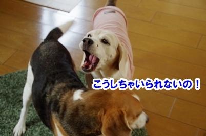 ふわあ 3